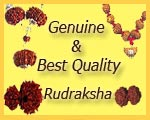 Genuine Best Quality Rudrakshas
